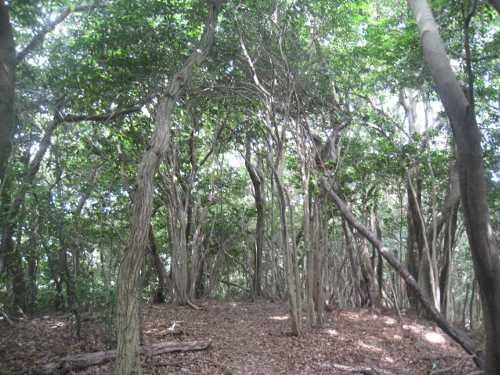 IMG_5117縦走路の広葉樹林