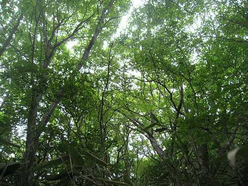IMG_5225新緑の平治岳斜面