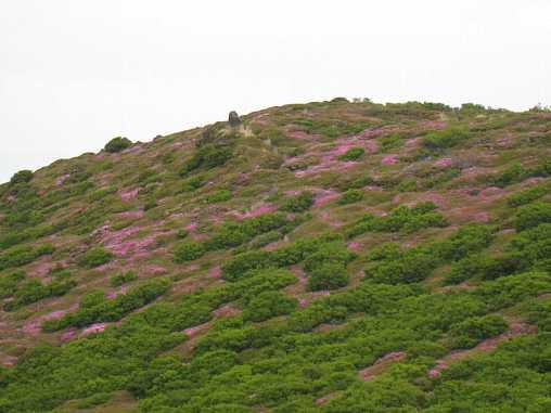 IMG_5271本峰斜面を見る