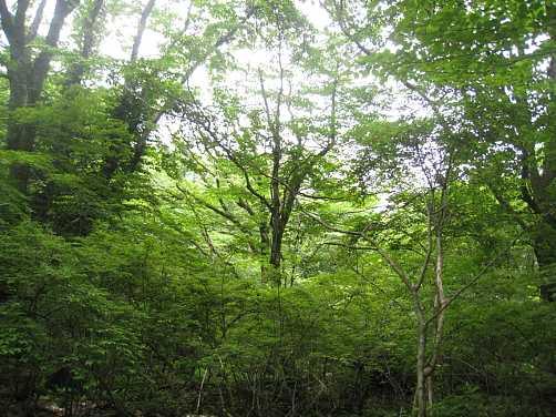 IMG_5322新緑の北尾根
