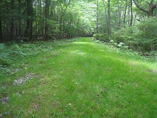 IMG_5324緑の絨毯の林道支線