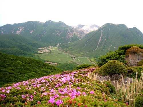 IMG_5283ミヤマキリシマと三俣山