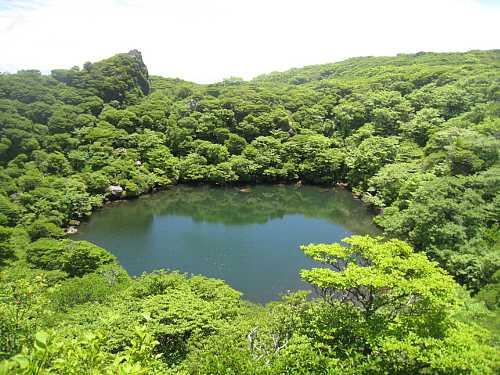 IMG_5403新緑の御池
