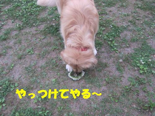 IMG_1607.jpg