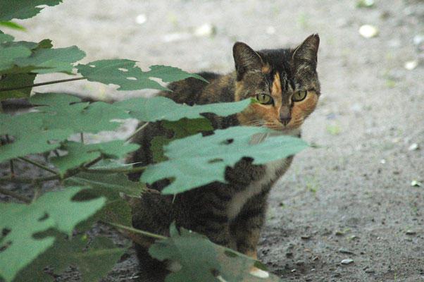 081011_01cat.jpg