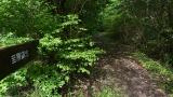 20150517原生の森55