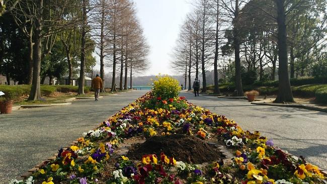 150317菜の花 (2)