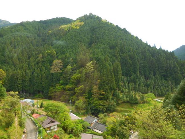 150430高野山緑 (1)
