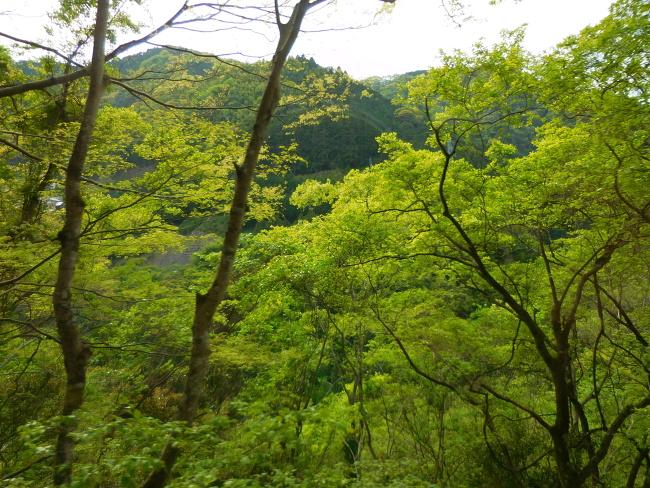 150430高野山緑 (3)