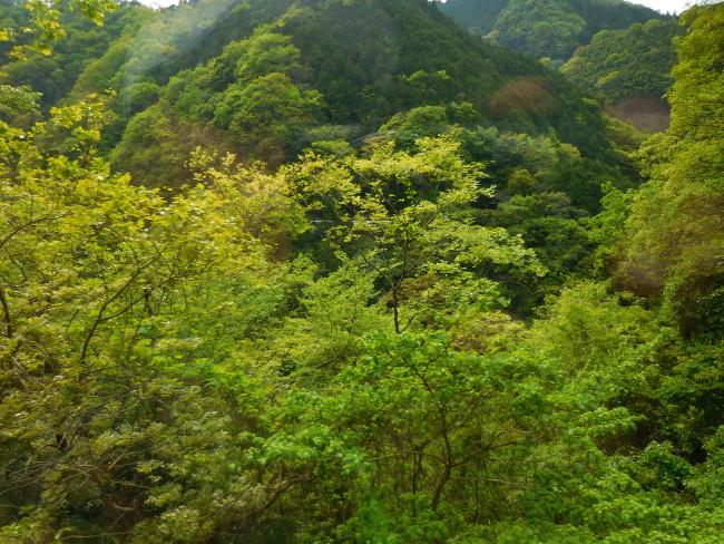 150430高野山緑 (2)