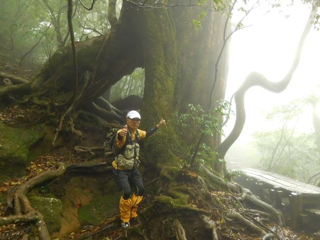 150508屋久島巨木 (8)