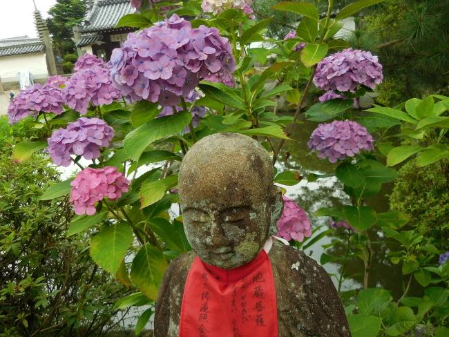 150623紫陽花 (6)