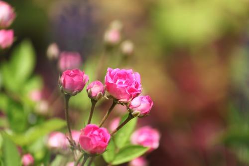 花たち 3