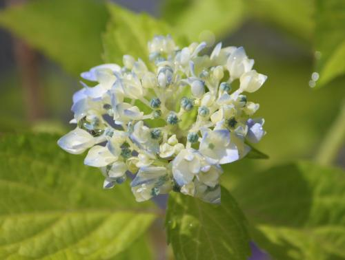 花たち 1