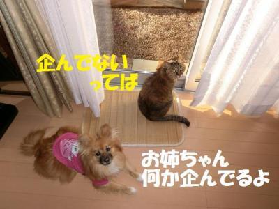 040繝シ繧ウ繝。繝ウ繝・convert_20150120223915