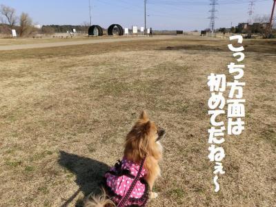 003繝シ繧ウ繝。繝ウ繝・convert_20150208154918
