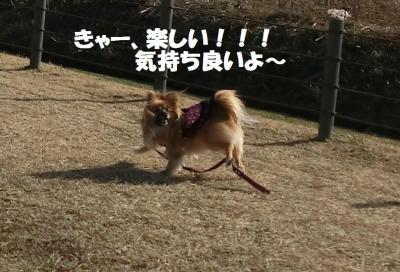 008繝シ繧ウ繝。繝ウ繝・convert_20150208155235