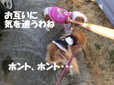 006繝シ繧ウ繝。繝ウ繝・convert_20150216211307