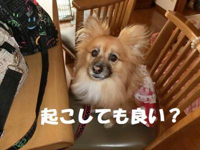 036繝シ繧ウ繝。繝ウ繝・convert_20150303215313