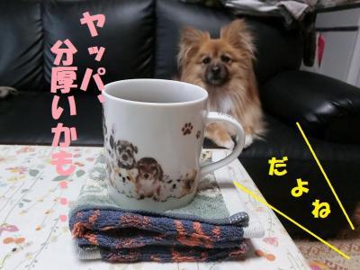 014繝シ繧ウ繝。繝ウ繝・convert_20150307113542