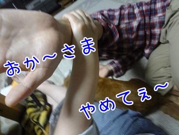 kinako2637.jpg