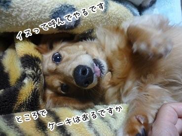 kinako2646.jpg