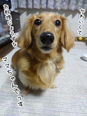 kinako2661.jpg