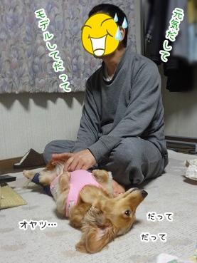 kinako2671.jpg