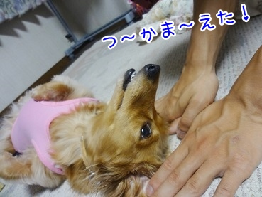 kinako2676.jpg