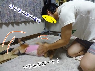 kinako2678.jpg