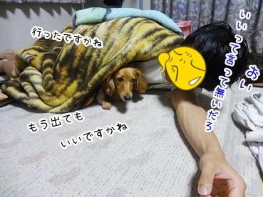 kinako2694.jpg