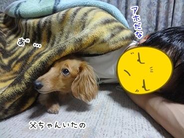 kinako2695.jpg
