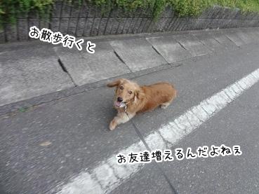 kinako2701.jpg