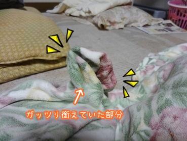 kinako2705.jpg