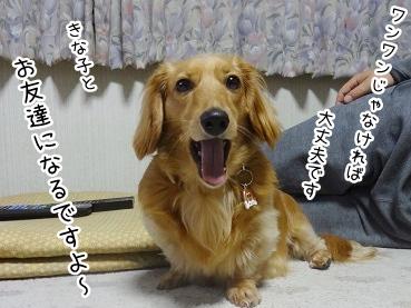 kinako2708.jpg