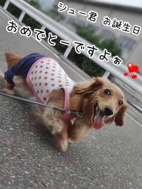 kinako2710.jpg