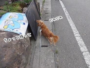 kinako2711.jpg