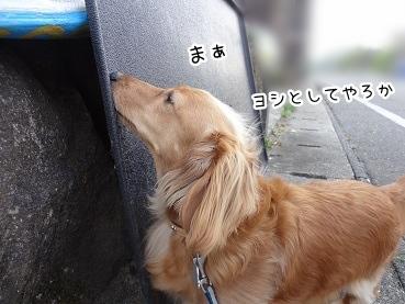 kinako2713.jpg