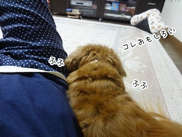 kinako2727.jpg