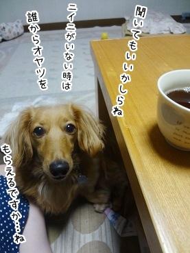 kinako2741.jpg