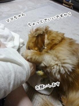 kinako2742.jpg