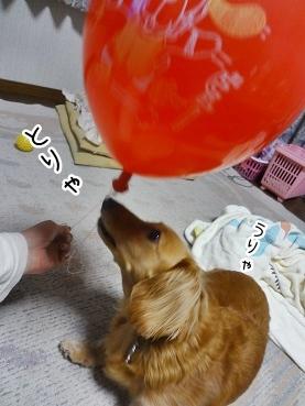 kinako2745.jpg