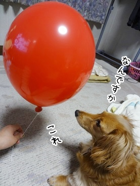 kinako2749.jpg