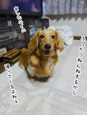 kinako2750.jpg