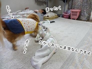 kinako2762.jpg