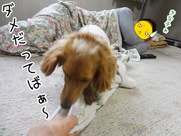 kinako2764.jpg