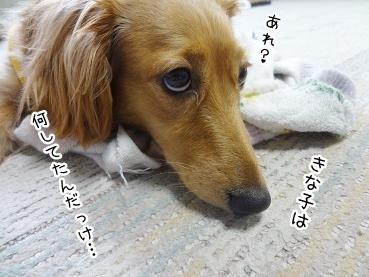 kinako2766.jpg