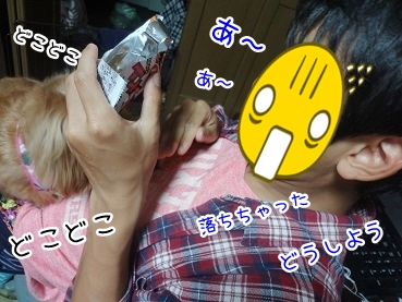 kinako2769.jpg
