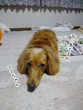 kinako2773.jpg
