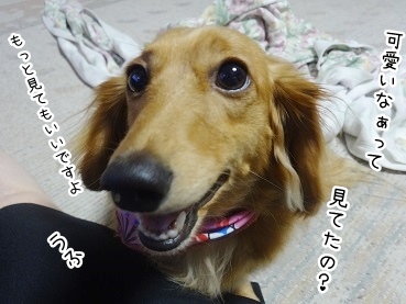kinako2775.jpg